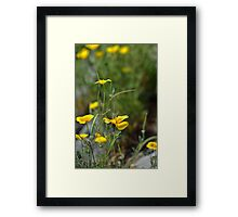 Yellow Poppy Framed Print
