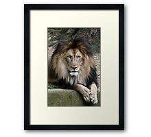A Majestic King Framed Print