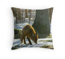 Vulpes Vulpes sniffing Throw Pillow