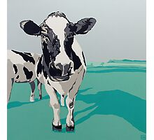 Two Cows Photographic Print