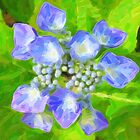 Blue & Green by Karen  Securius