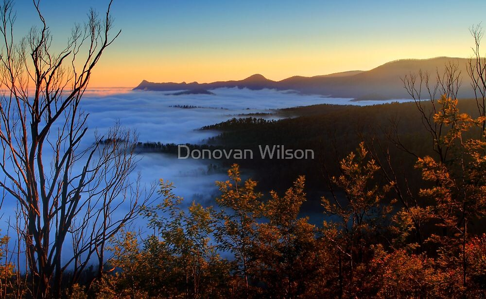 New life for a new day. Woods lookout Marysville  by Donovan Wilson