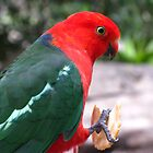 King Parrot by Marilyn Harris