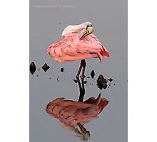 Spoonbill Making Pretty Photographic Print