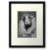 sheep person Framed Print