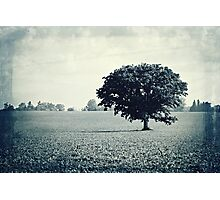 Solitary Tree Photographic Print