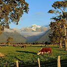 rural fox glacier by rina  thompson