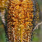 Black and Yellow Banksia by peasticks