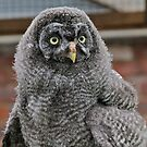 Wise, Young Owl by dilouise