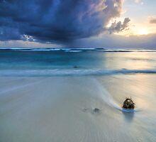 Lone Coconut by Karen Willshaw