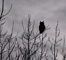 Owl Silhouette by Christy Patino