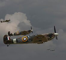 Spitfire - 'Buster' by Pat Speirs