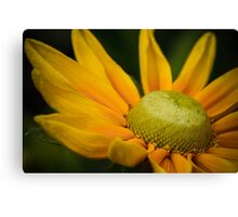 Macro Yellow Daisy Canvas Print
