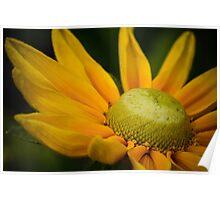 Macro Yellow Daisy Poster