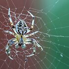 Macro Spider by Christy Patino