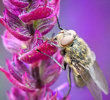 Fly On Flower by Christy Patino