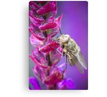 Fly On Flower Canvas Print
