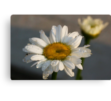"Ode to baby ""Daisy"" Canvas Print"