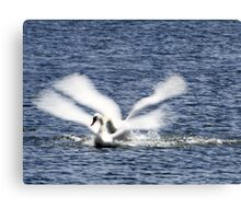 water angels Canvas Print