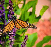 Monarch Butterfly by Christy Patino
