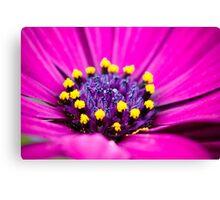 Macro Purple Daisy Canvas Print