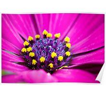 Macro Purple Daisy Poster