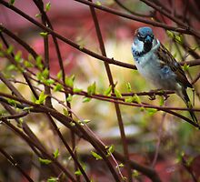 A Bird In The Bush by Christy Patino