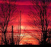 Vibrant Sunset by Christy Patino