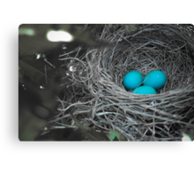 Robin Eggs In Blue Canvas Print