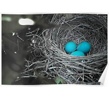 Robin Eggs In Blue Poster