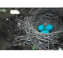 Robin Eggs In Blue Photographic Print