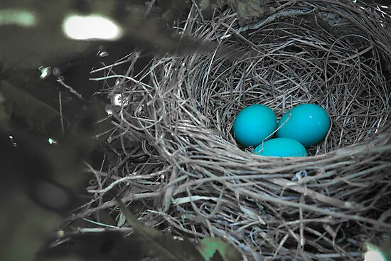 Robin Eggs In Blue by Christy Patino