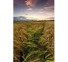 Barley, Suffolk Photographic Print