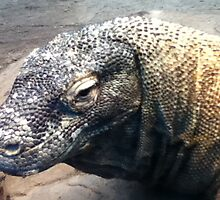 Komodo Dragon by awartell