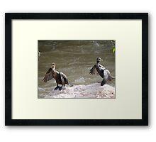 Nature's Synchronization II - Syncronización De La Naturaleza Framed Print