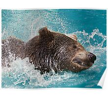 Bear's splashing in the Water Poster