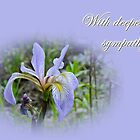 Sympathy Greeting Card - Wild Flag Iris by MotherNature