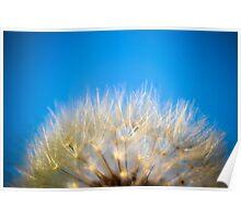 Dandelion Sky Poster