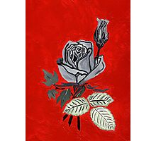 Shades of Gray with Roses Photographic Print