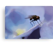 The fly! Canvas Print