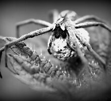 Spider by JulieGrant
