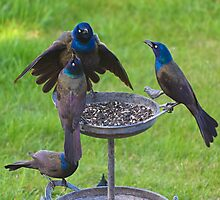 Grackles Doing What They Do Photographic Print