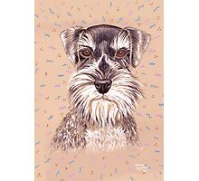 Miniature German Schnauzer dog Photographic Print