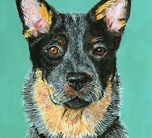 Beaut Australian Cattle dog by didielicious