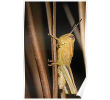 Just A Grasshopper Poster