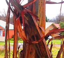 Straps of bark .. .. .. Kilmore East Victoria Australia by Margaret Morgan (Watkins)