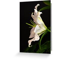 Without Blemish Greeting Card