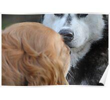 House dog meets wild bear. Poster