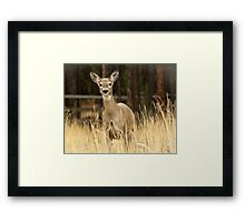 I hunt with a Nikon! Framed Print