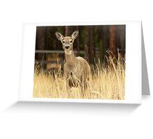 I hunt with a Nikon! Greeting Card